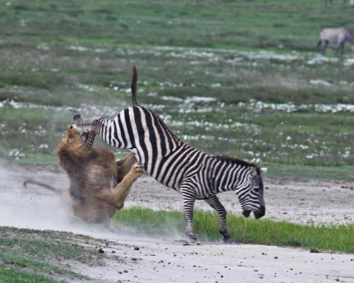 Tasavire Khatarnak 7 تصاویر جالب و دیدنی از لحظات باور نکردنی و خطرناک